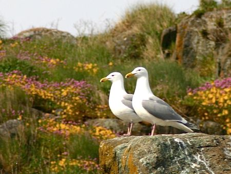 Seagulls in flowers