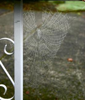 Mailbox Spider Web