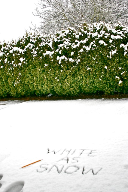 White as snow w:trees