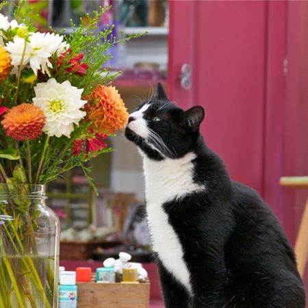 Abby and the flowers