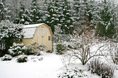 Snowycoop_5